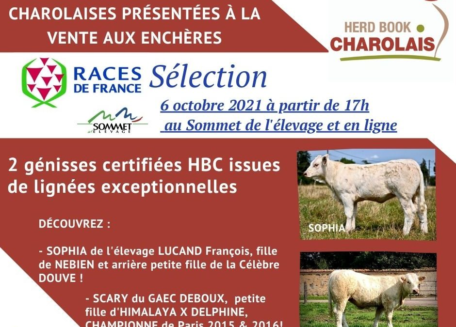 Sommet de l'élevage : Ne ratez pas la Vente aux enchères de Génisses Races de France Sélection !